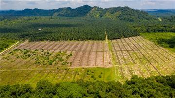 Án lệ số 16/2017/AL về công nhận hợp đồng chuyển nhượng quyền sử dụng đất là di sản thừa kế do một trong các đồng thừa kế chuyển nhượng
