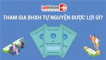 Infographic: Tham gia BHXH tự nguyện được nhận những gì?