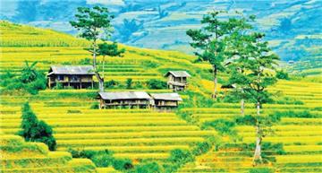 Xây nhà trên đất nông nghiệp không bị phá dỡ nếu nộp tiền phạt?