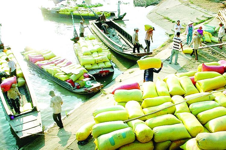 tạm ứng trước hạn ngạch xuất khẩu gạo