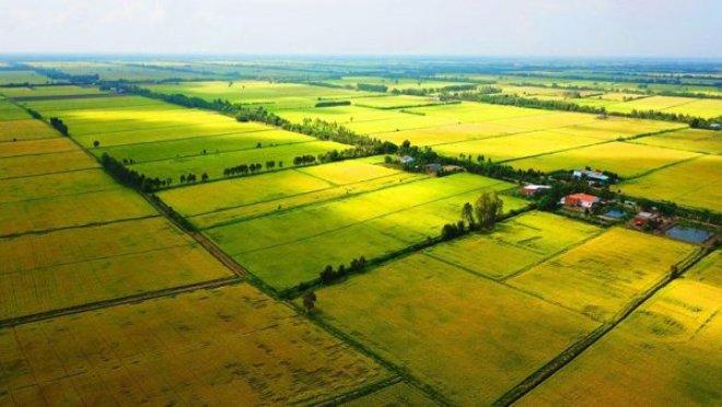 Đề xuất mở rộng hạn mức mua bán đất nông nghiệp