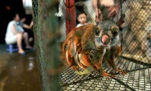 Việt Nam dừng nhập khẩu động vật hoang dã