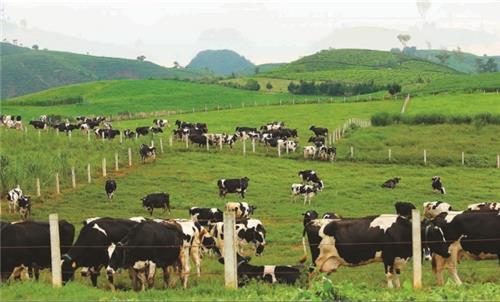 Giảm 50% mức thu phí trong chăn nuôi đến hết 31/12/2021