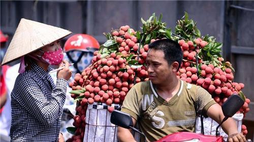 Ưu tiên lưu thông đối với xe chở vải thiều từ Bắc Giang